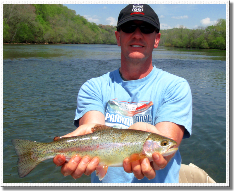 Common Holston River rainbow trout.