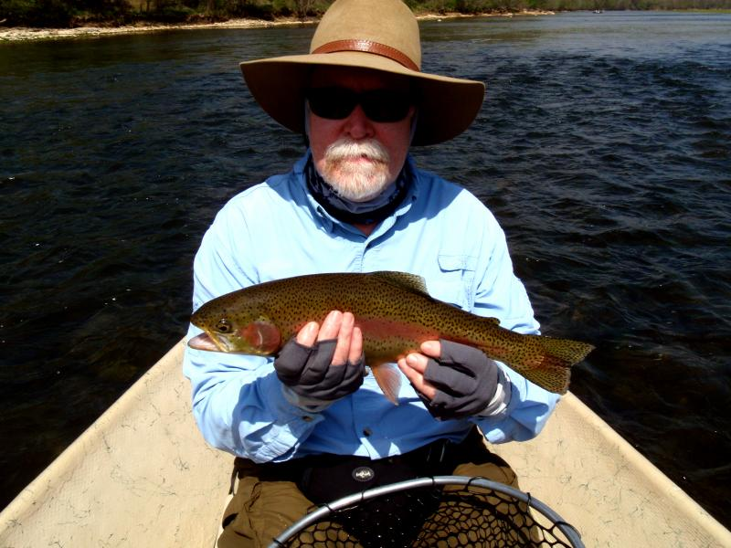 Beautiful trophy trout caught fly fishing on Tennessee Tailwaters.