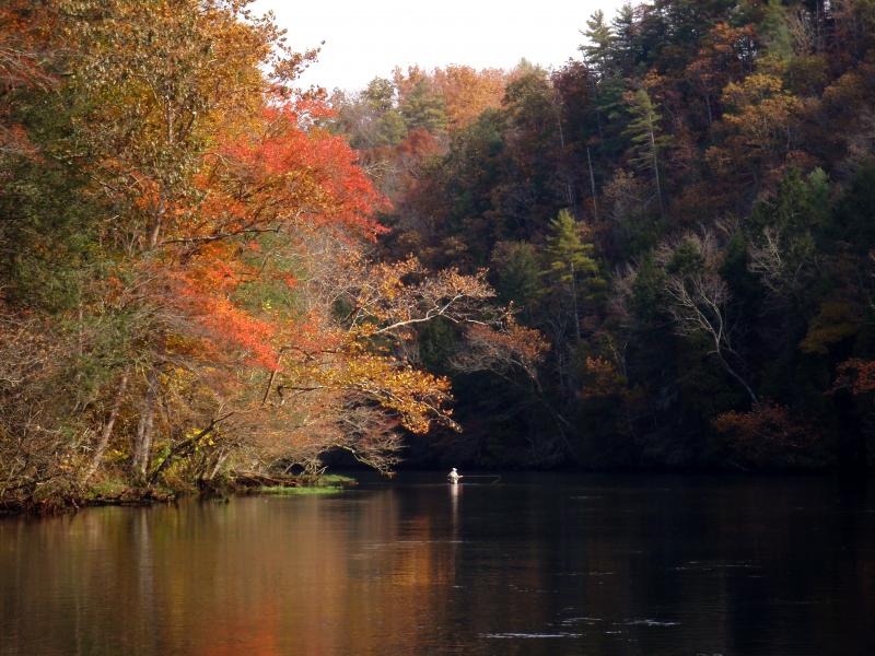 Beautiful fall colors on the South Holston River with Rocky Top Anglers.