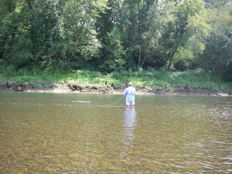 Wade fishing for trout in the cumberland river with fly rod