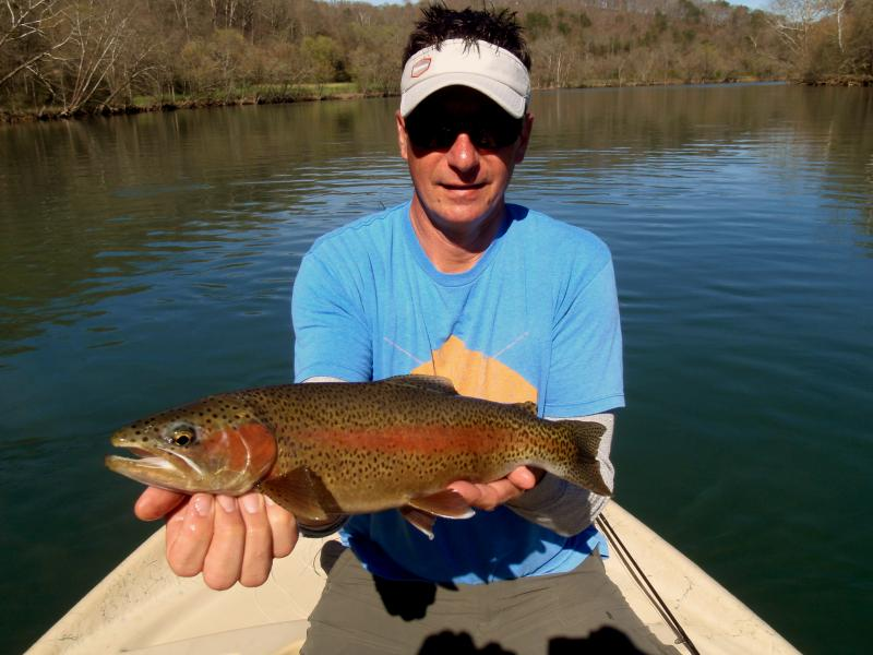 Trophy Rainbow Trout in Tennessee with Fly fishing guide Rocky Cox