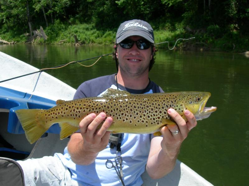 Large Cumberland River Brown Guided Fly Fishing Rocky Cox