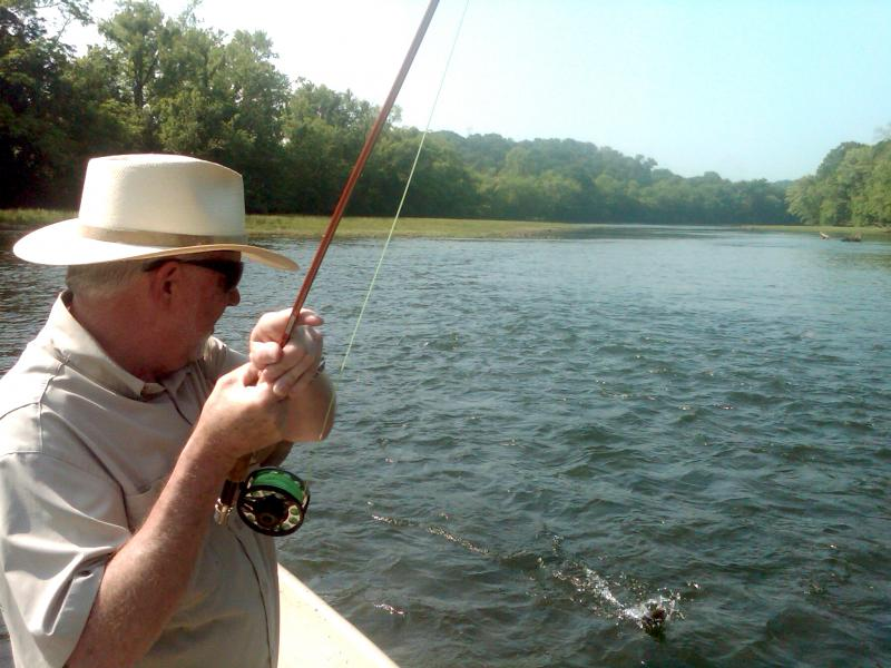 Hooked up with a rainbow trout on a guided fly fishing trip tn guide rocky cox