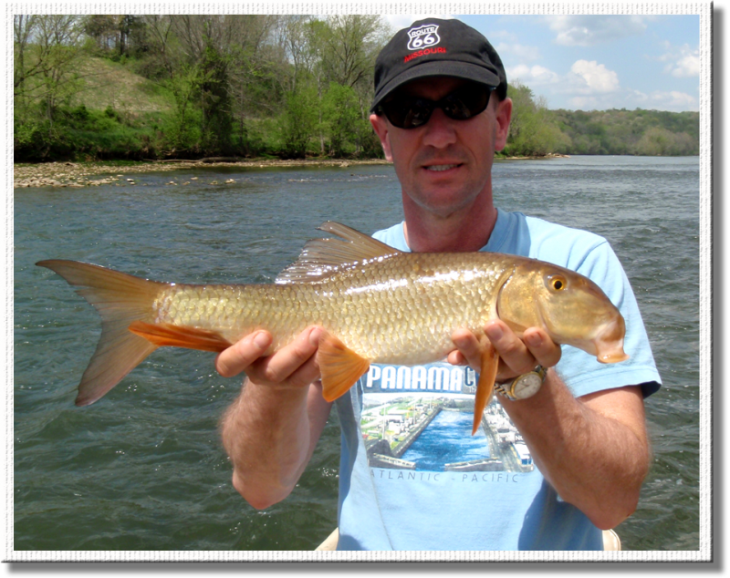Fly fishermen catches a nice redhorse on the fly.